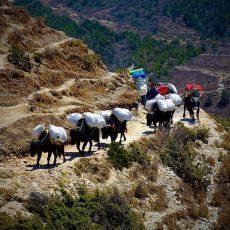 Непал треккинг к Эвересту
